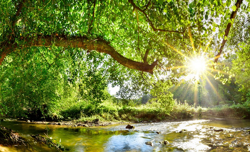 Beautiful forest panorama with brook and bright sun shining thro